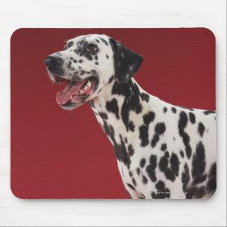 Dalmatian Mouse Pad
