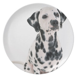 Dalmatian Plate
