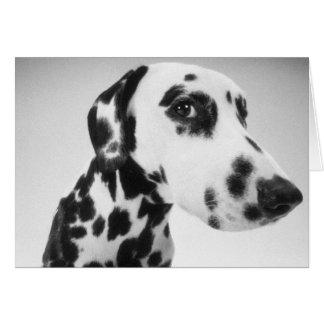 Dalmatian Products Card