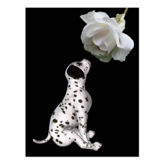 Dalmatian Puppy And White Rose Postcard