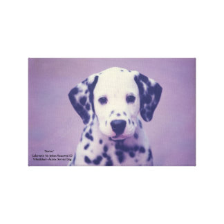Dalmatian Puppy -- Baron Gallery Wrapped Canvas
