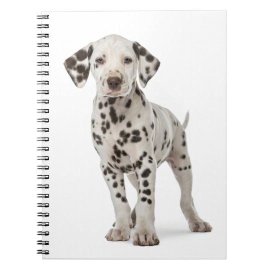 Dalmatian Puppy Dog - Black And White Spots