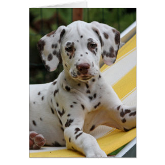 Dalmatian puppy dog greeting card