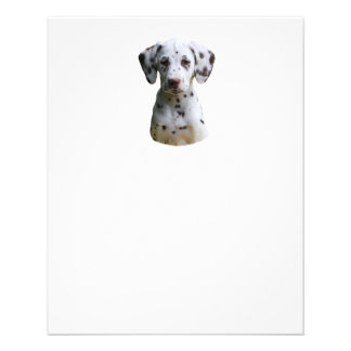 Dalmatian puppy dog photo 11.5 cm x 14 cm flyer