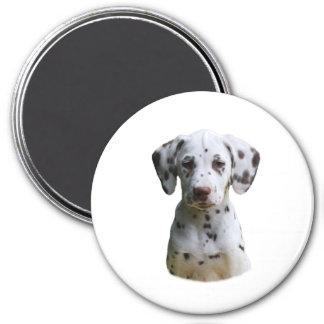 Dalmatian puppy dog photo 7.5 cm round magnet
