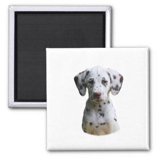 Dalmatian puppy dog photo square magnet