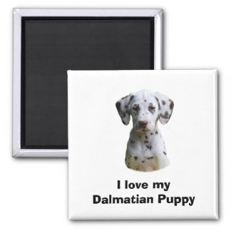 Dalmatian puppy dog photo magnet