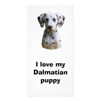 Dalmatian puppy dog photo picture card