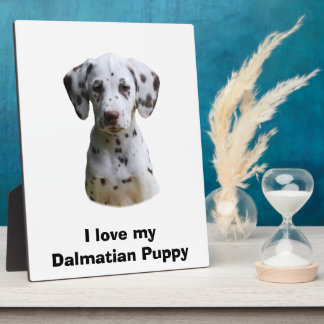 Dalmatian puppy dog photo plaque