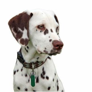 Dalmatian puppy photo sculpture, gift idea standing photo sculpture