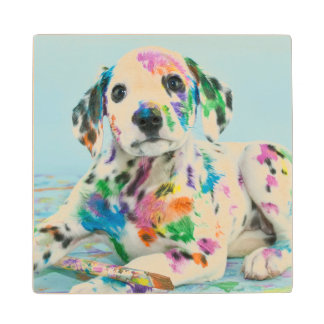 Dalmatian Puppy Wood Coaster