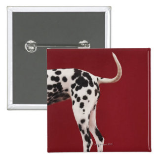Dalmatian Rear 15 Cm Square Badge