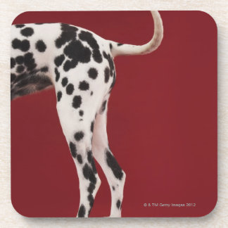 Dalmatian Rear Beverage Coasters