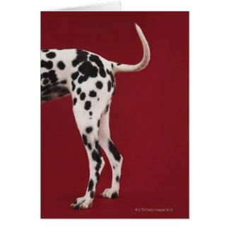 Dalmatian Rear Greeting Card