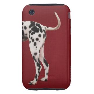 Dalmatian Rear Tough iPhone 3 Cases