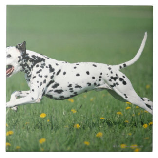Dalmatian Running Tile