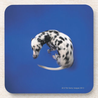 Dalmatian spinning coaster
