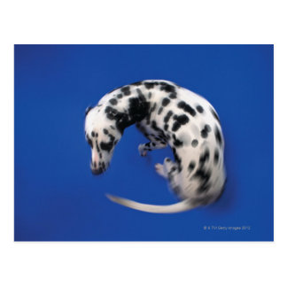 Dalmatian spinning postcard