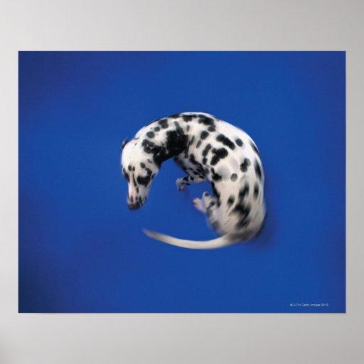 Dalmatian spinning print