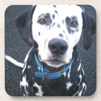 Dalmation Dog Dexter Beverage Coaster