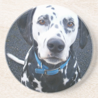 Dalmation Dog Dexter Drink Coasters