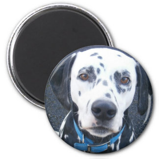 Dalmation Dog Dexter Magnet