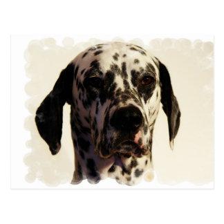 Dalmation Dog Postcard