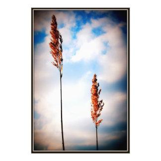Dam Weeds Photographic Print