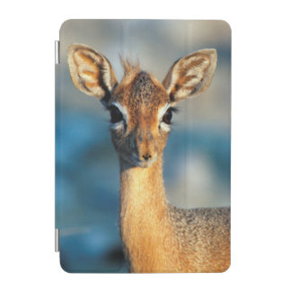 Damara Dik-Dik, Etosha National Park, Namibia iPad Mini Cover