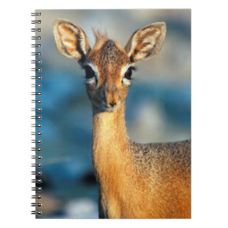 Damara Dik-Dik, Etosha National Park, Namibia Notebook