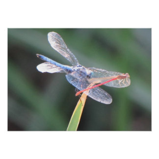Damsel Fly Perched on Dragonfly Poster