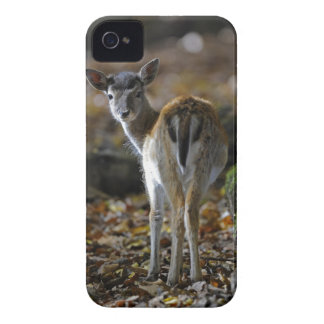 Damwild, Dama dama, fallow deer, Hirschkalb iPhone 4 Covers