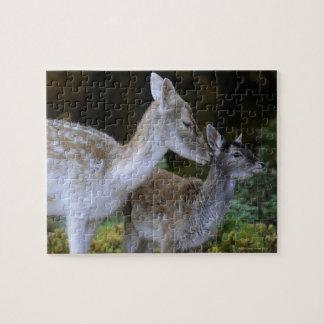 Damwild, Dama dama, fallow deer, Hirschkalb Puzzles
