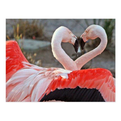 Dance of Love Postcards