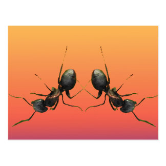 Dancing Ants Postcard