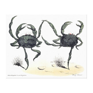 Dancing Crabs On Cloth Stretched Canvas Prints
