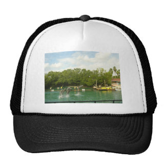 Dancing Dolphins in Miami Mesh Hats