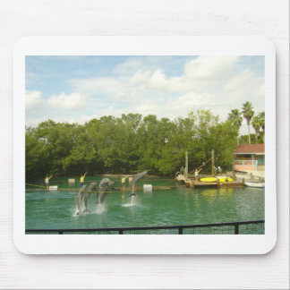 Dancing Dolphins in Miami Mouse Pad