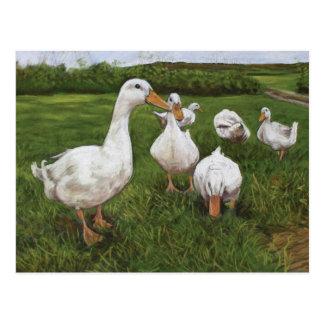 Dancing ducks postcard