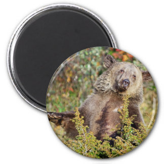 Dancing Grizzly Bear Magnets