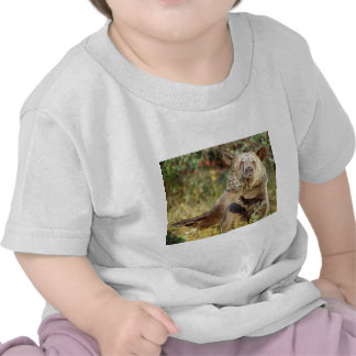Dancing Grizzly Bear T Shirt