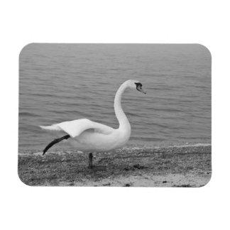 Dancing swan vinyl magnet