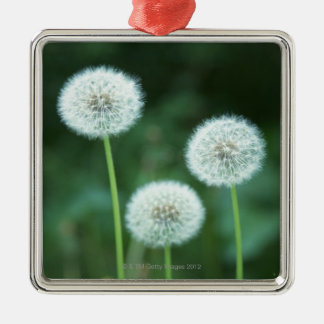 Dandelion 2 christmas ornament