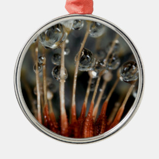Dandelion and water drops, CA Christmas Ornament