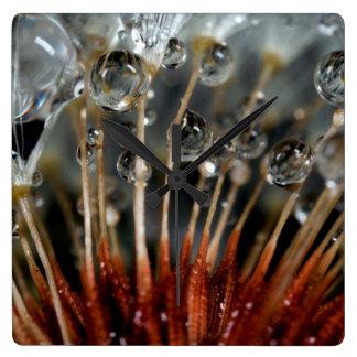 Dandelion and water drops, CA Clocks