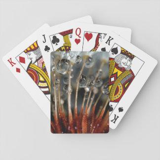 Dandelion and water drops, CA Poker Deck