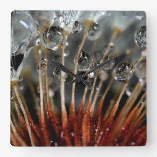 Dandelion and water drops, CA Square Wall Clock