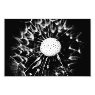 dandelion blacq art photo