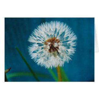 Dandelion Blue Card