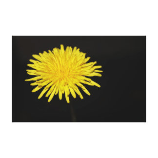 Dandelion Butter Cup | Blossom | Yellow Canvas Print